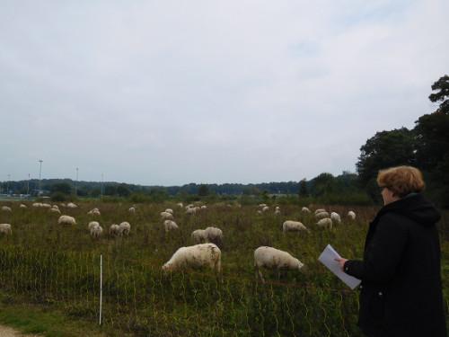 Graadmeter schapen tellen
