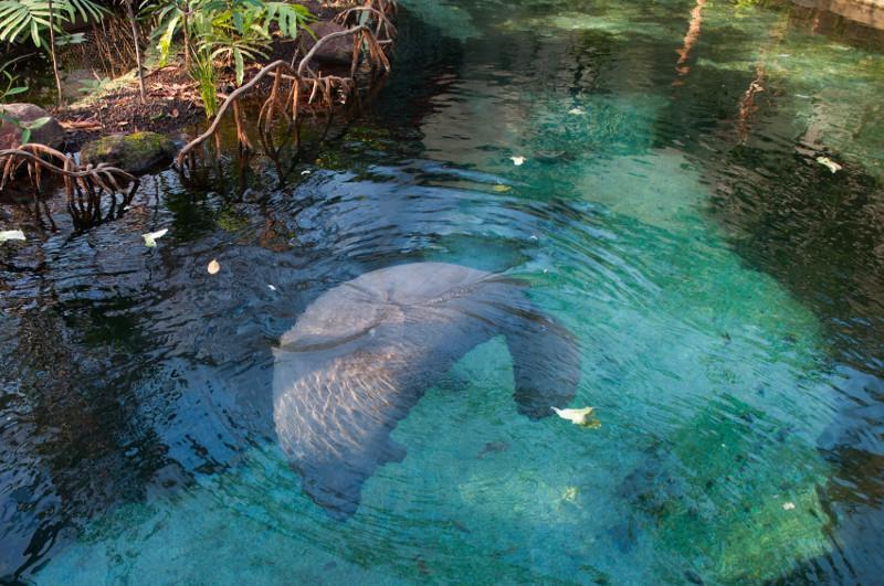 Burgers Zoo Zeekoe groot