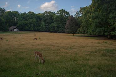 Sonsbeekpark 2370x